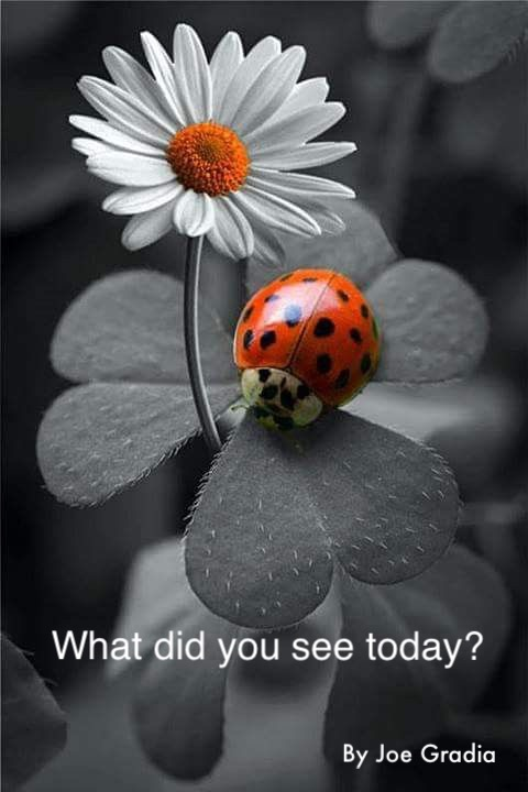 What caught your eye today ?  By Joe Gradia
