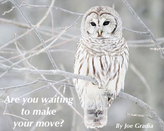 Are you waiting to make your move? By Joe Gradia